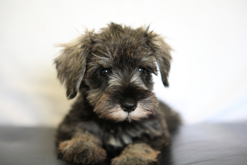 puppy02.jpgのサムネール画像