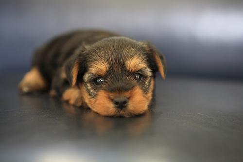 puppy03.jpg