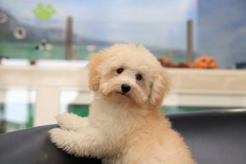 puppy06.jpg